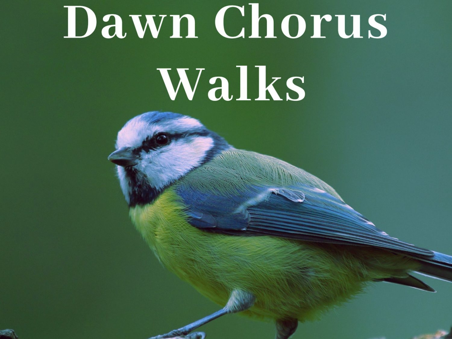 Dawn Chorus Walks at Sudeley Castle