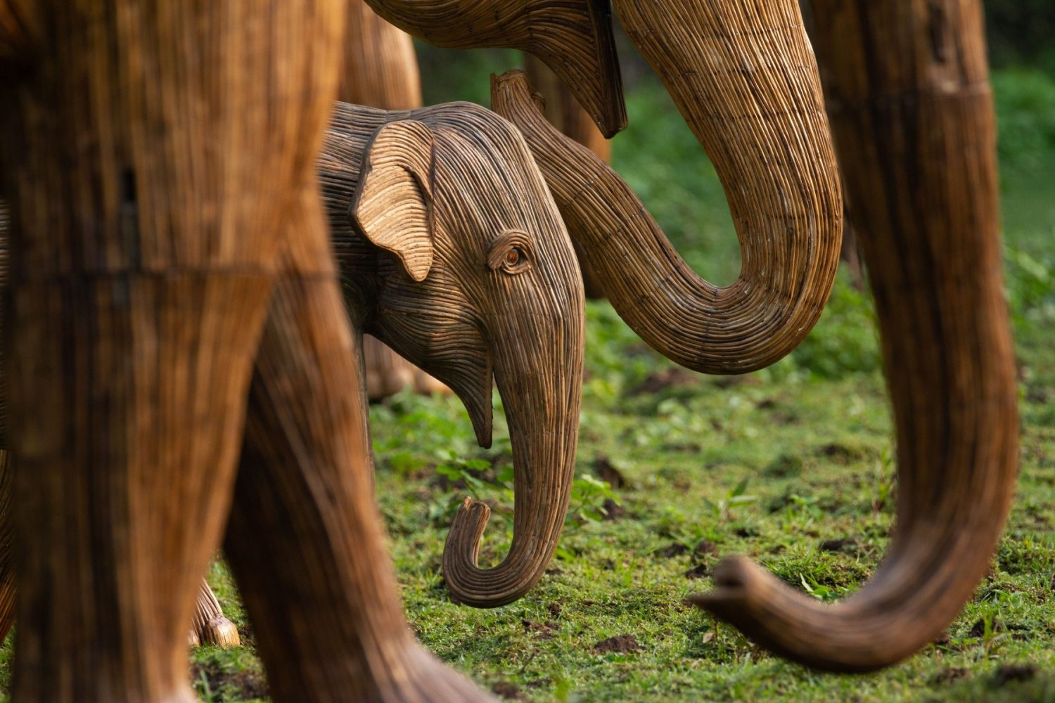 Life size baby elephant sculptures surrounded by adult elephant trunks
