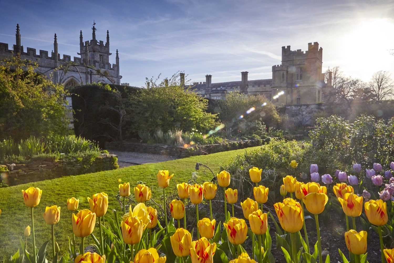 Spring Tulips in the Secret Garden