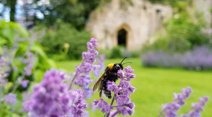 Image for Bee and butterfly trail at Sudeley Castle
