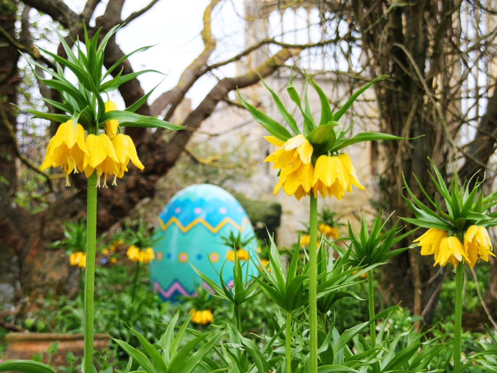 Giant egg behind Fritillaria Crown Imperial Flowers
